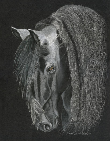 Friesian Drawing - Beau by Laurie With