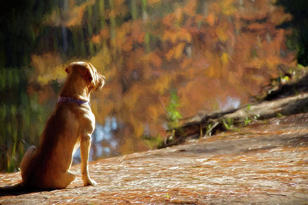 Wall Art - Photograph - Beau's Waiting by Lana Trussell