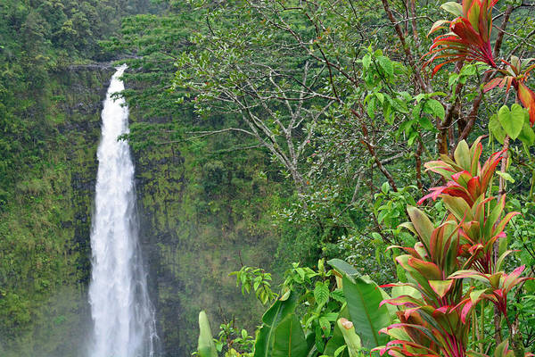 Photograph - Beautiful Akaka Falls by Bruce Gourley