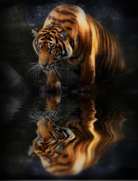 Orange Cat Photograph - Beautiful Animal by Kym Clarke