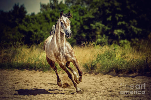 Photograph - Beautiful Arabian Horse by Dimitar Hristov