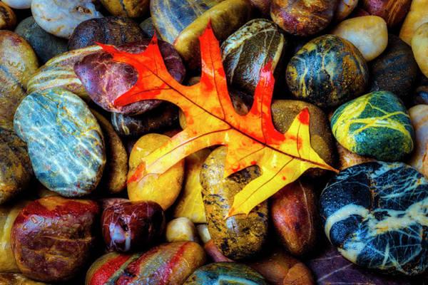 Hard Rock Photograph - Beautiful Autumn Leaf by Garry Gay