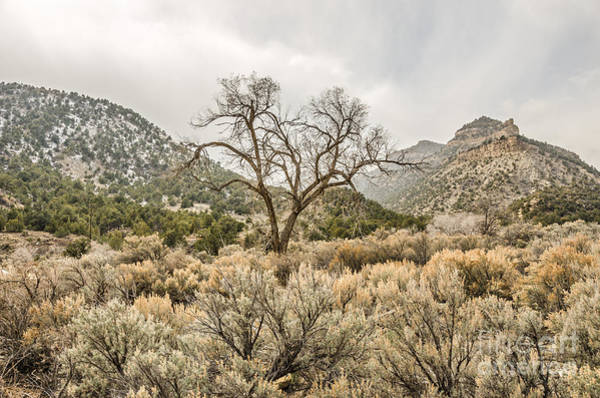 Photograph - Beautiful Bare Tree by Sue Smith