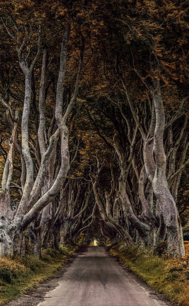 Photograph - Beautiful Beech Alley In Northern Ireland by Jaroslaw Blaminsky