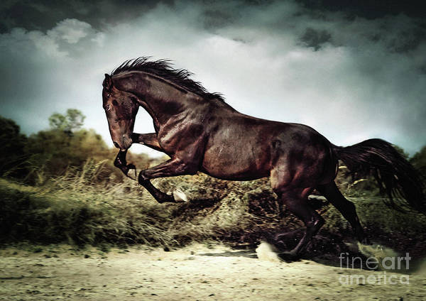 Photograph - Beautiful Black Stallion Horse Running On The Stormy Sky II by Dimitar Hristov