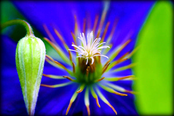 Photograph - Beautiful Bloom by Susie Weaver
