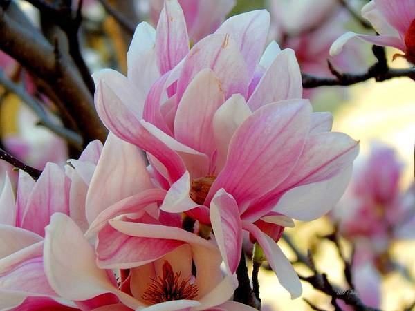 Photograph - Beautiful Blooms by Wild Thing