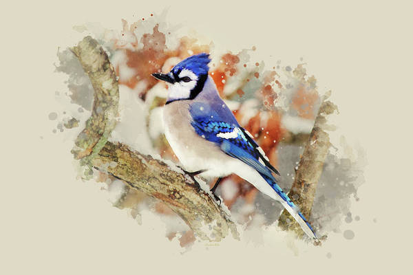 Mixed Media - Beautiful Blue Jay - Watercolor Art by Christina Rollo