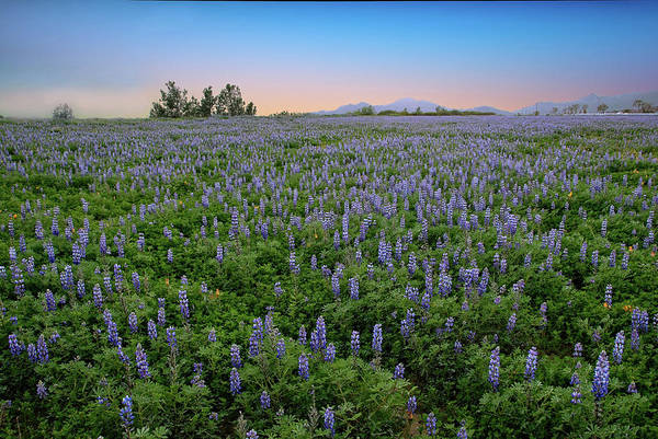 Photograph - Beautiful Blues In Porter Ranch by Lynn Bauer