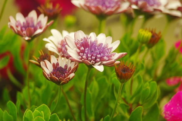Living Things Photograph - Beautiful Boquet by Jeff Swan