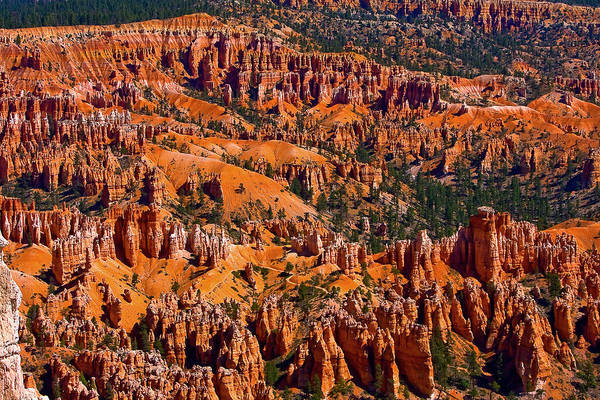 Photograph - Beautiful Bryce Canyon by James BO Insogna