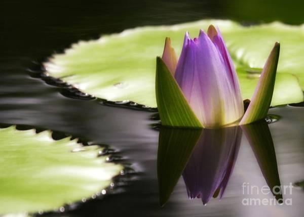 Photograph - Beautiful Bud Reflection by Sabrina L Ryan