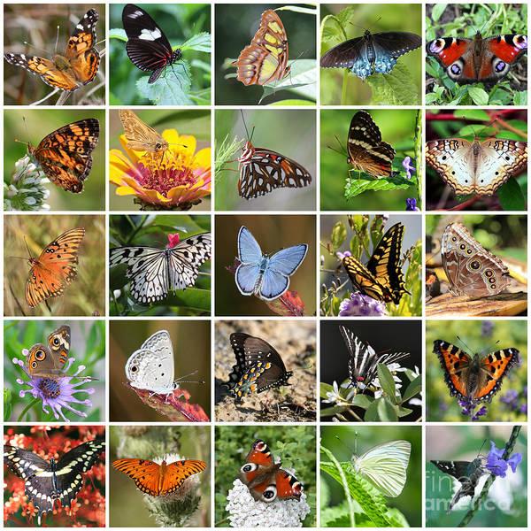 Photograph - Beautiful Butterflies Collage by Carol Groenen