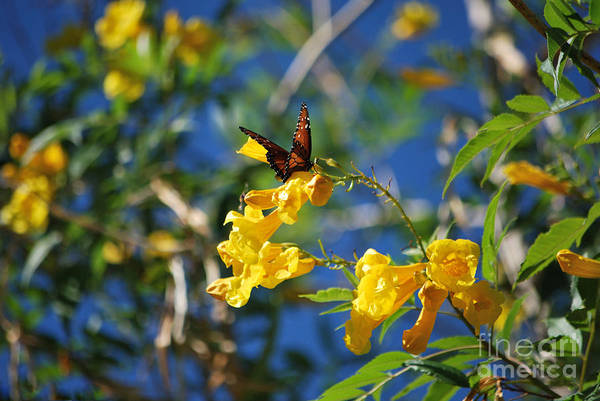 Photograph - Beautiful Butterfly by Donna Greene