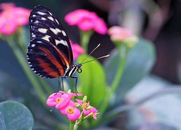 Photograph - Beautiful Butterfly by Garvin Hunter