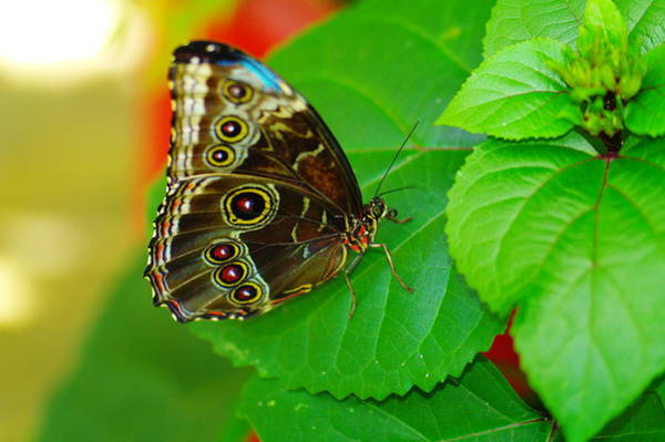 Wall Art - Photograph - Beautiful Butterfly by Jeff Swan