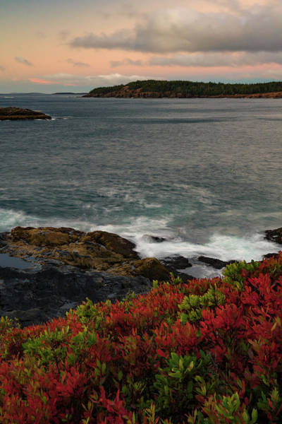 Photograph - Beautiful Colors Of Acadia In The Fall by Darylann Leonard Photography