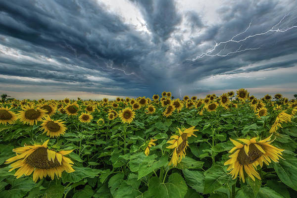 Photograph - Beautiful Disaster  by Aaron J Groen