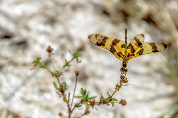 Photograph - Beautiful Dragonfly by Wolfgang Stocker