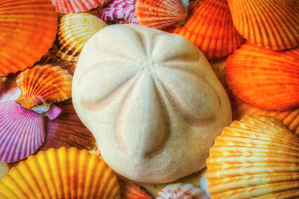 Wall Art - Photograph - Beautiful Exotic Sand Dollar by Garry Gay