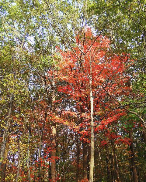 Frankenmuth Photograph - Beautiful Fall Colors  by Irina Sztukowski