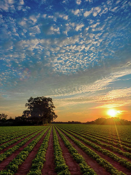 Photograph - Beautiful Farm Sunset by Brad Boland