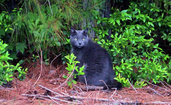 Photograph - Beautiful Feline by Cynthia Guinn