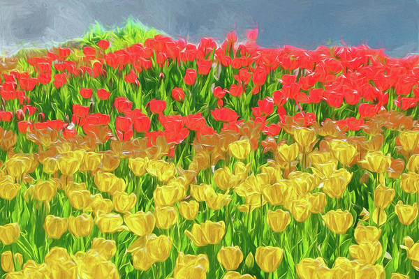 Digital Art - Beautiful Field Of Red And  Yellow Tulips by Rusty R Smith