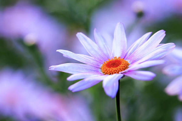 Photograph - Beautiful Flower by Mahesh Balasubramanian