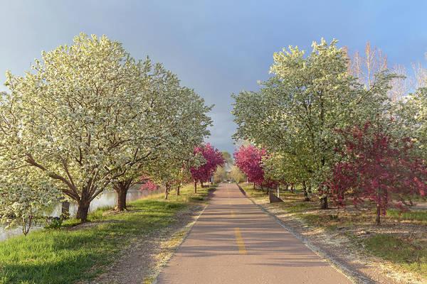 Wall Art - Photograph - Beautiful Flowering Bike Path by Bridget Calip