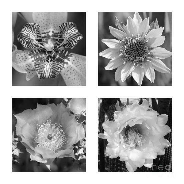 Photograph - Beautiful Flowers In Black And White Collage by Carol Groenen