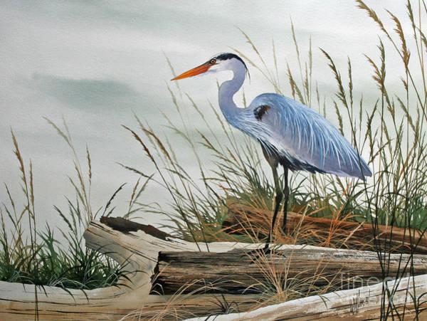Herons Wall Art - Painting - Beautiful Heron Shore by James Williamson