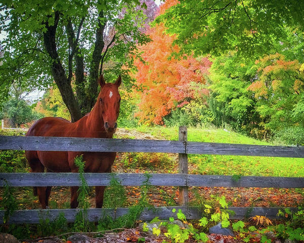 Photograph - Beautiful Horse In Fall Foliage by John Vose