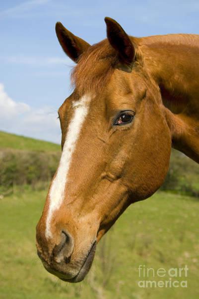 Wall Art - Photograph - Beautiful Horse Portrait by Meirion Matthias