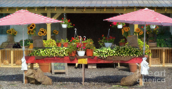 Photograph - Beautiful Long Island Farm Stand by Ann Jacobson