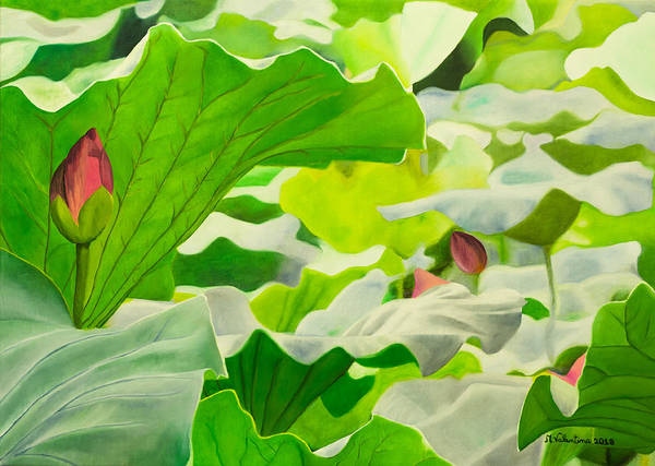 Nelumbo Nucifera Painting - Beautiful Lotus Flower With Leaves In A Pond by Maria Valentina Greco