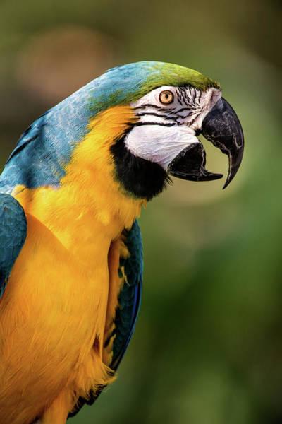 Photograph - Beautiful Macaw by Don Johnson