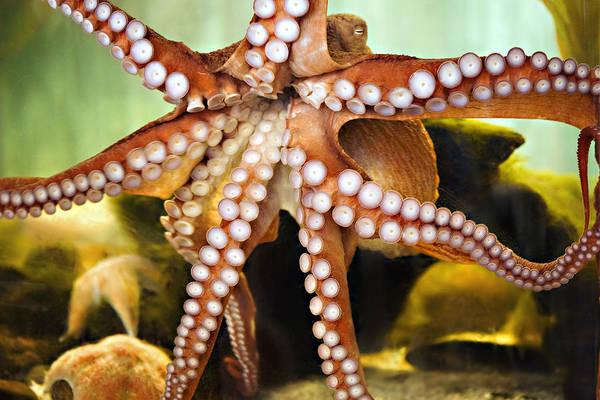 Sea Hunt Photograph - Beautiful Octopus by Marilyn Hunt