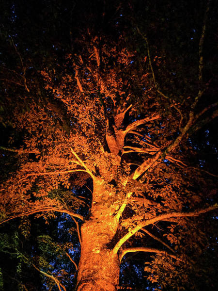 Photograph - Beautiful Orange Tree At Night by Michael Bessler
