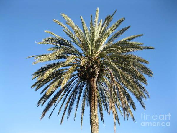 Painting - Beautiful Palm Tree by Oksana Semenchenko