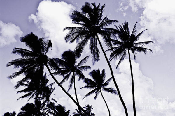 Wall Art - Photograph - Beautiful Palms Of Maui 14 by Micah May