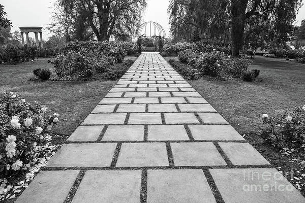 Wall Art - Photograph - Beautiful Pathway Along The Rose Garden Of The Huntington Librar by Jamie Pham