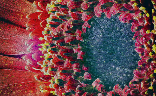 Photograph - Beautiful Pink Red Chrysanthemum Flower Blossom Oil Painting by John Williams