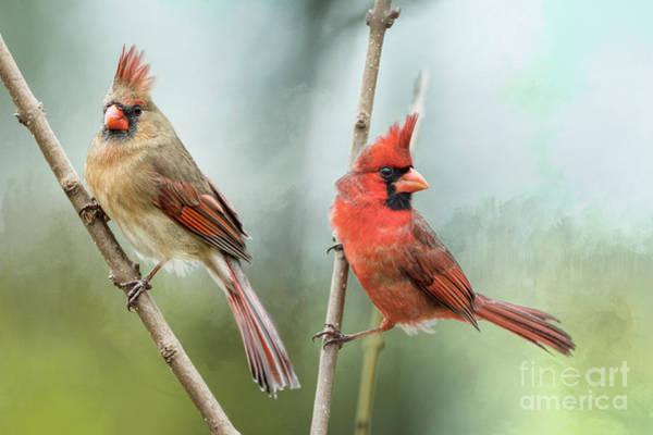 Wall Art - Photograph - Beautiful Redbird Pair by Bonnie Barry