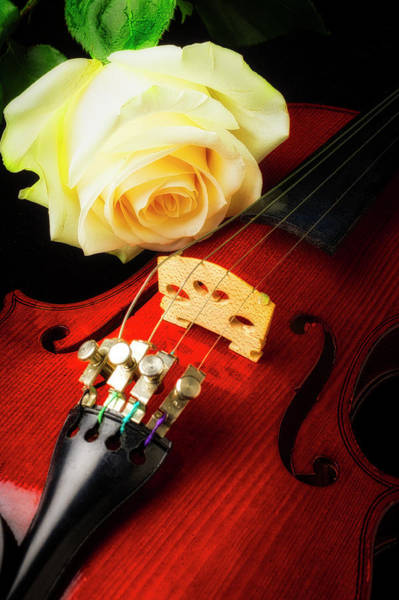 Foilage Photograph - Beautiful Rose And Violin by Garry Gay