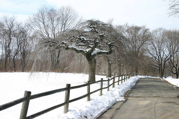 Wall Art - Photograph - Beautiful Snow Setting by Dennis Curry