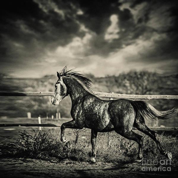Photograph - Beautiful Stallion Running by Dimitar Hristov