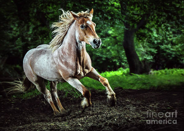 Photograph - Beautiful Strong Horse Galloping Stallion In The Forest by Dimitar Hristov