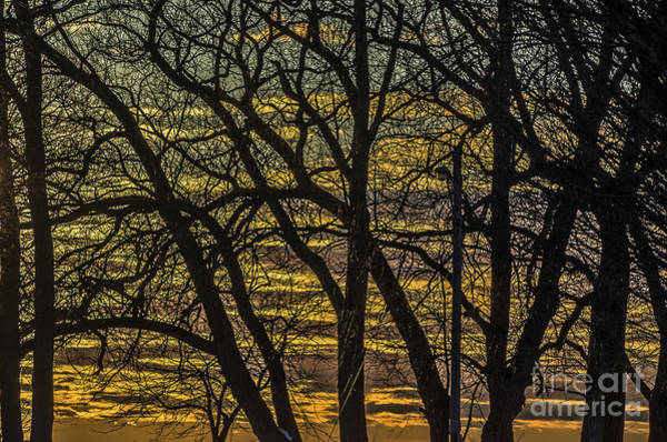 Photograph - Beautiful Sunset Behind Bare Trees by Sue Smith