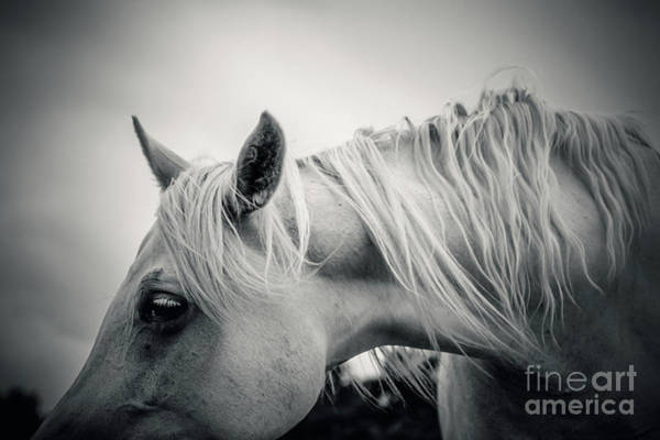 Photograph - Beautiful Tender White Horse Portrait Close Up by Dimitar Hristov